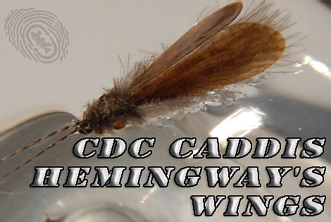CDC Caddis Hemingway's wings