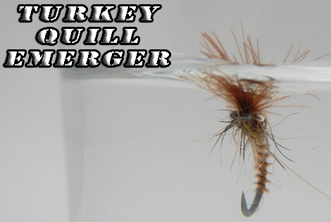 Turkey quill emerger